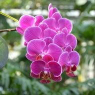 筑波実験植物園  蘭